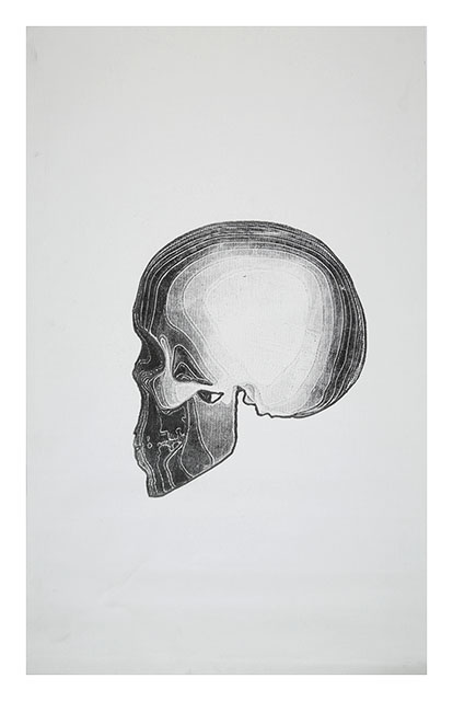 Skull on canvas